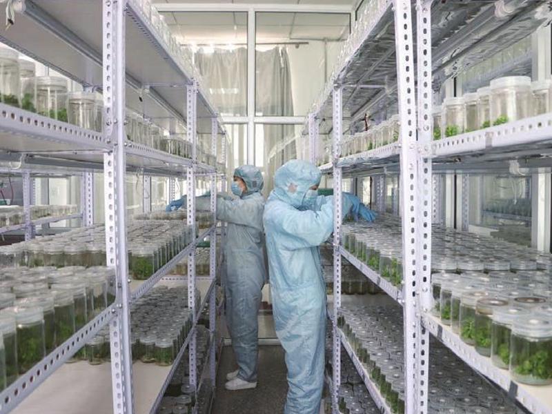 组培室,植物组织培养