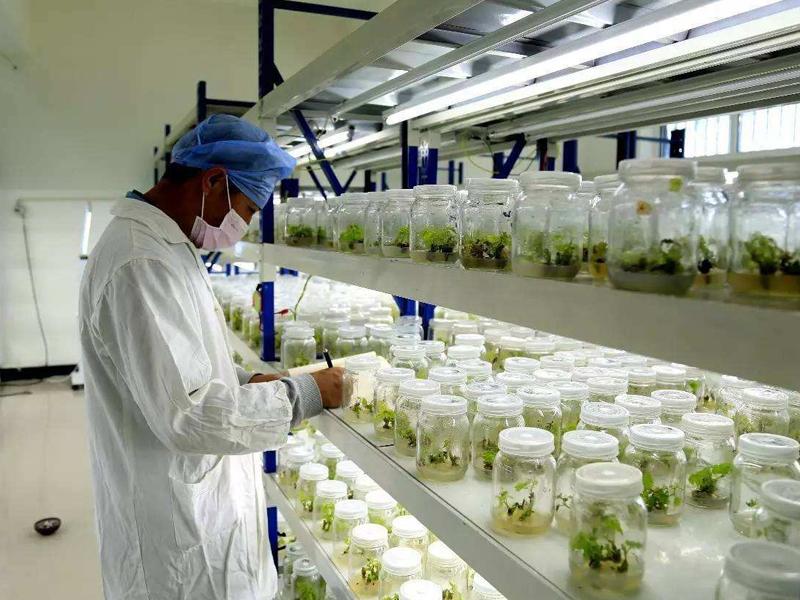 植物组织培养,组培