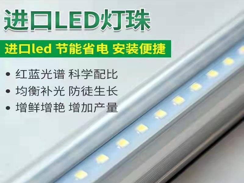LED组培灯-白红光