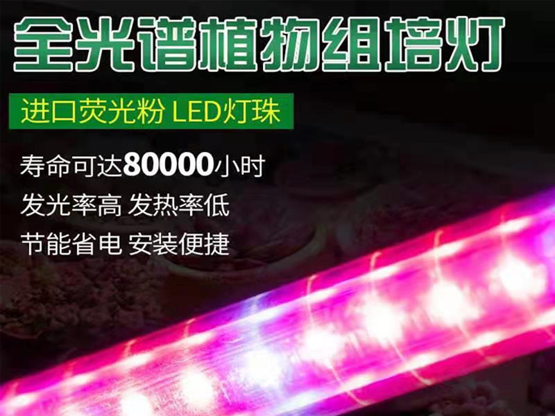红蓝光LED组培灯
