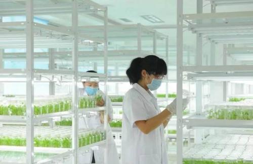 植物组织培养