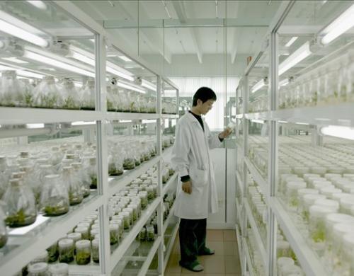 植物组培中褐变的原因及其预防措施